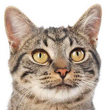 Acti-Croq aliments pour chats