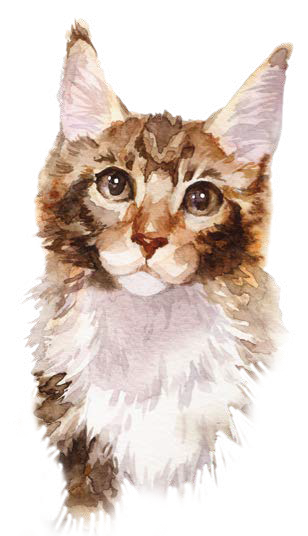 Mhims Ragoût aliment complet humide pour chats