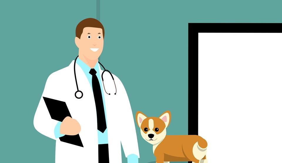 En cas de symptômes, amenez votre chien chez le vétérinaire