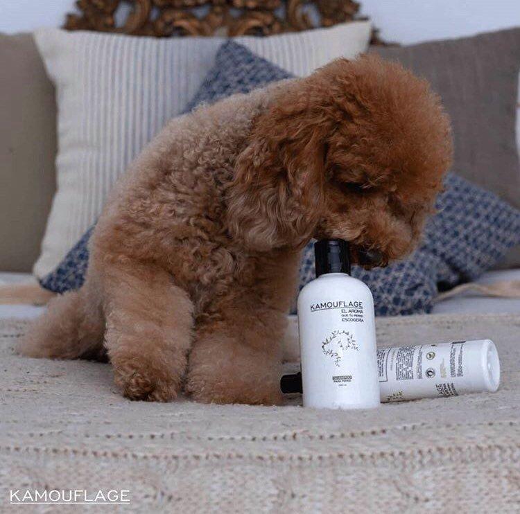 Shampooing Kamouflage et Parfum Kamouflage 100% naturel pour chiens