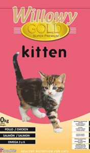 Willowy Gold Kitten
